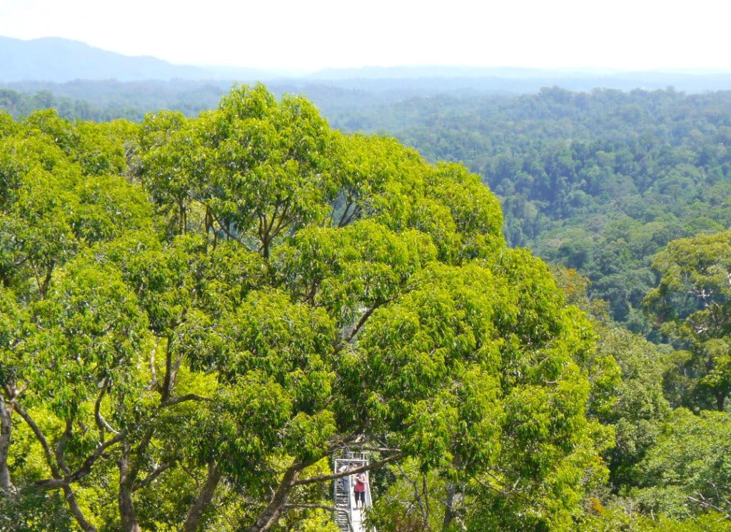 Brunei's Borneo Jungle