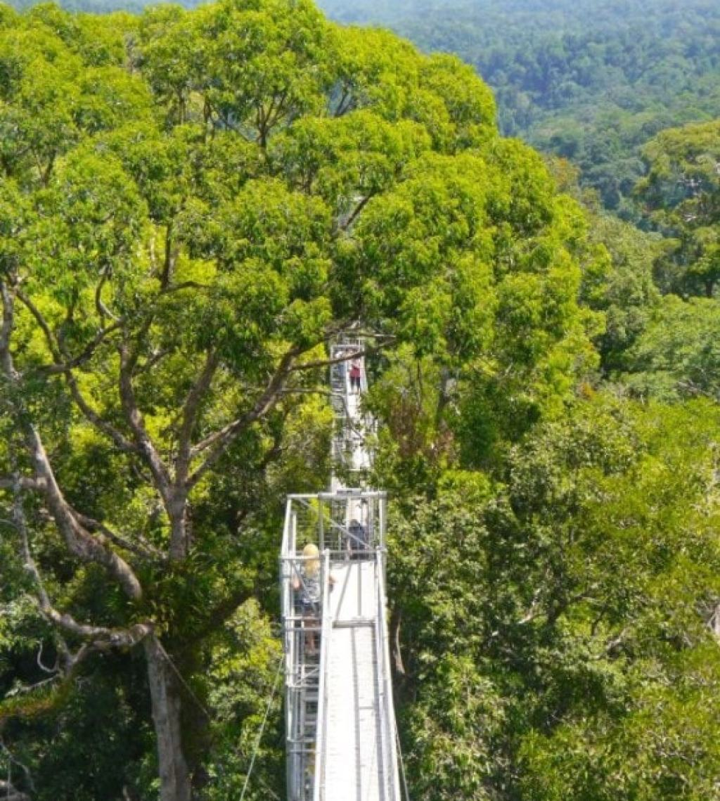 Brunei's jungle