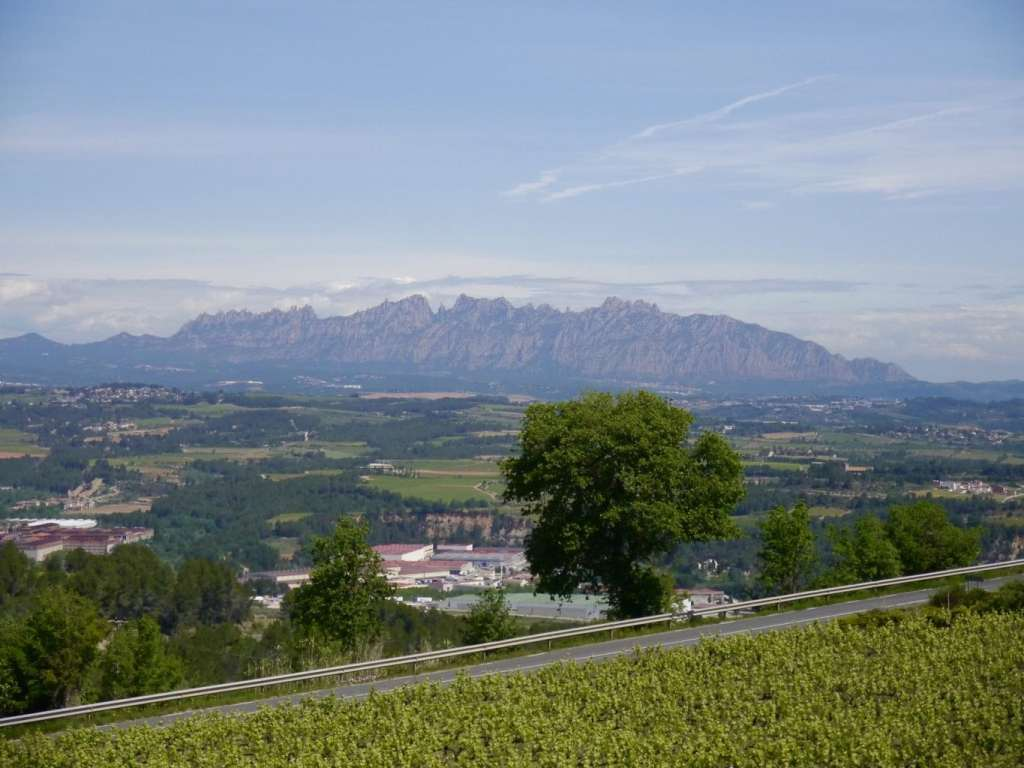 View from country house at Cava Llopart