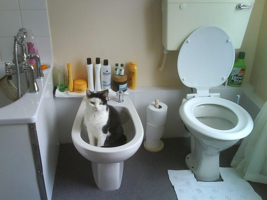Bidet cat