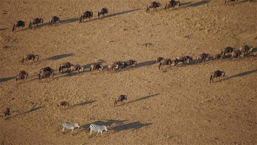Shadows of wildlife from a hot air balloon safari