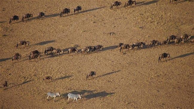 """Shadows of wildlife from a hot air balloon safari"" Hot air balloon over the Maasai Mara"