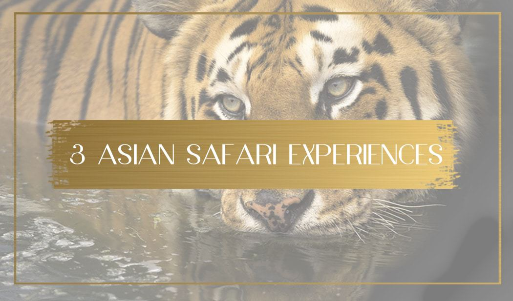 Safari in Asia main
