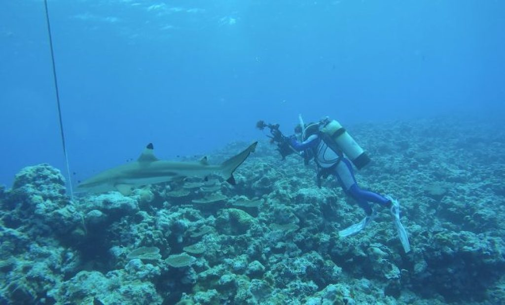 Sharks at Vertigo in Yap