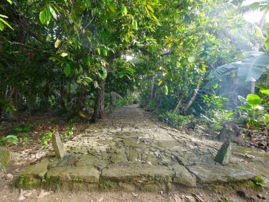 Coral top path in Yap