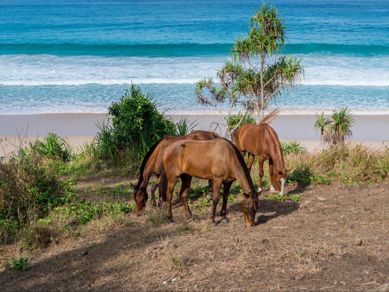 Horses at Nihi Sumba