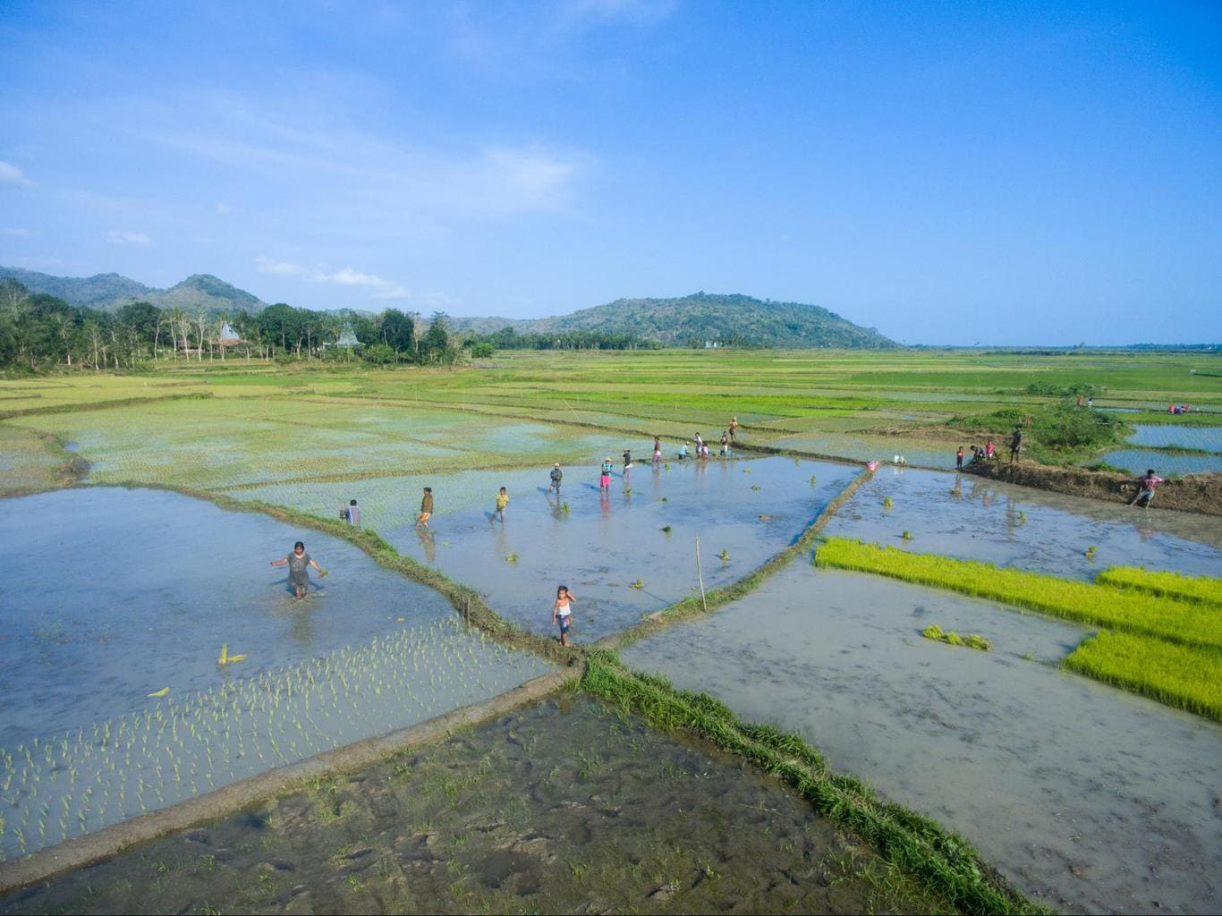 Nihi Sumba Hotel review, Rice paddies