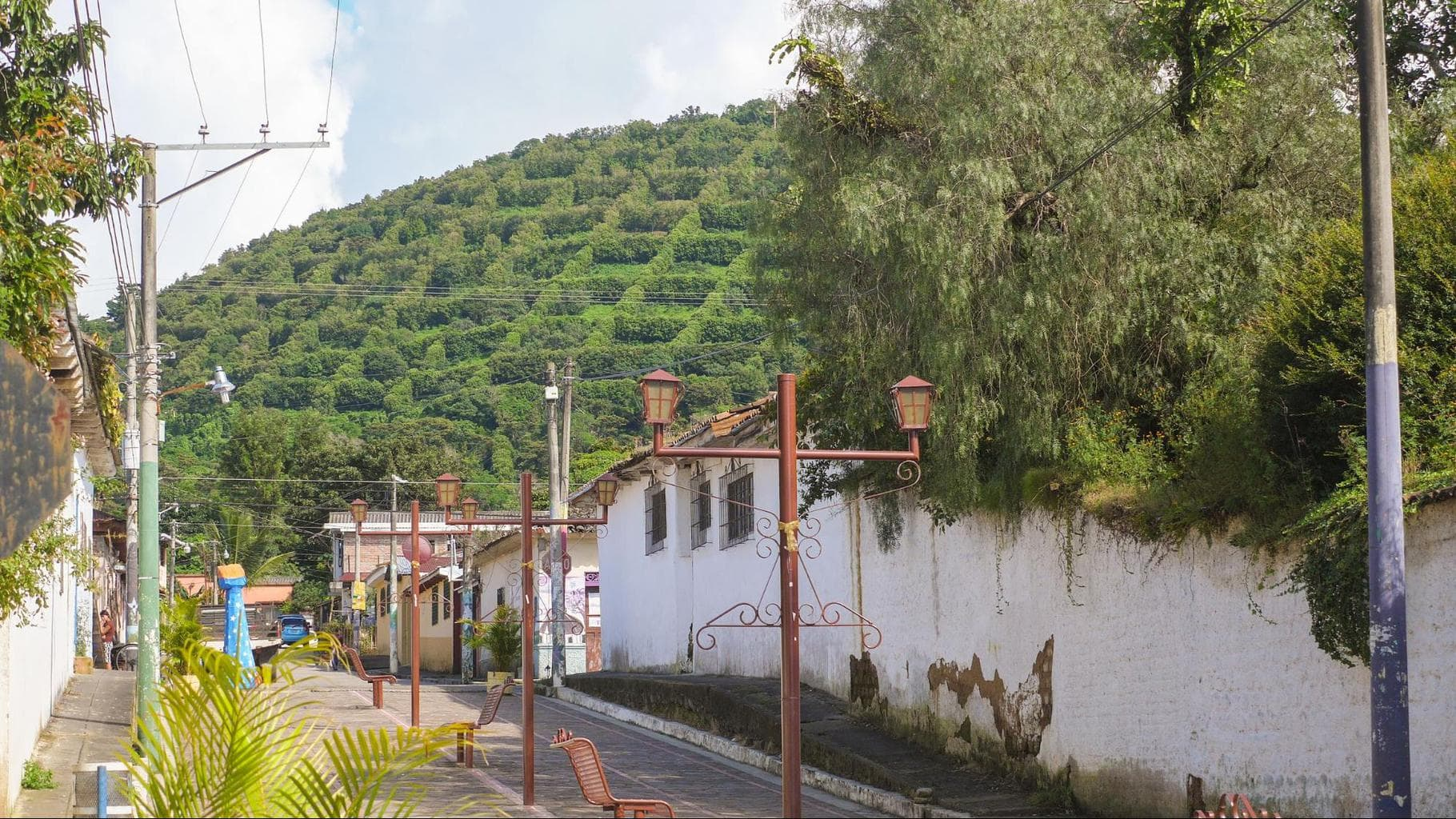 Checkered shaped coffee bushes in Apeneca