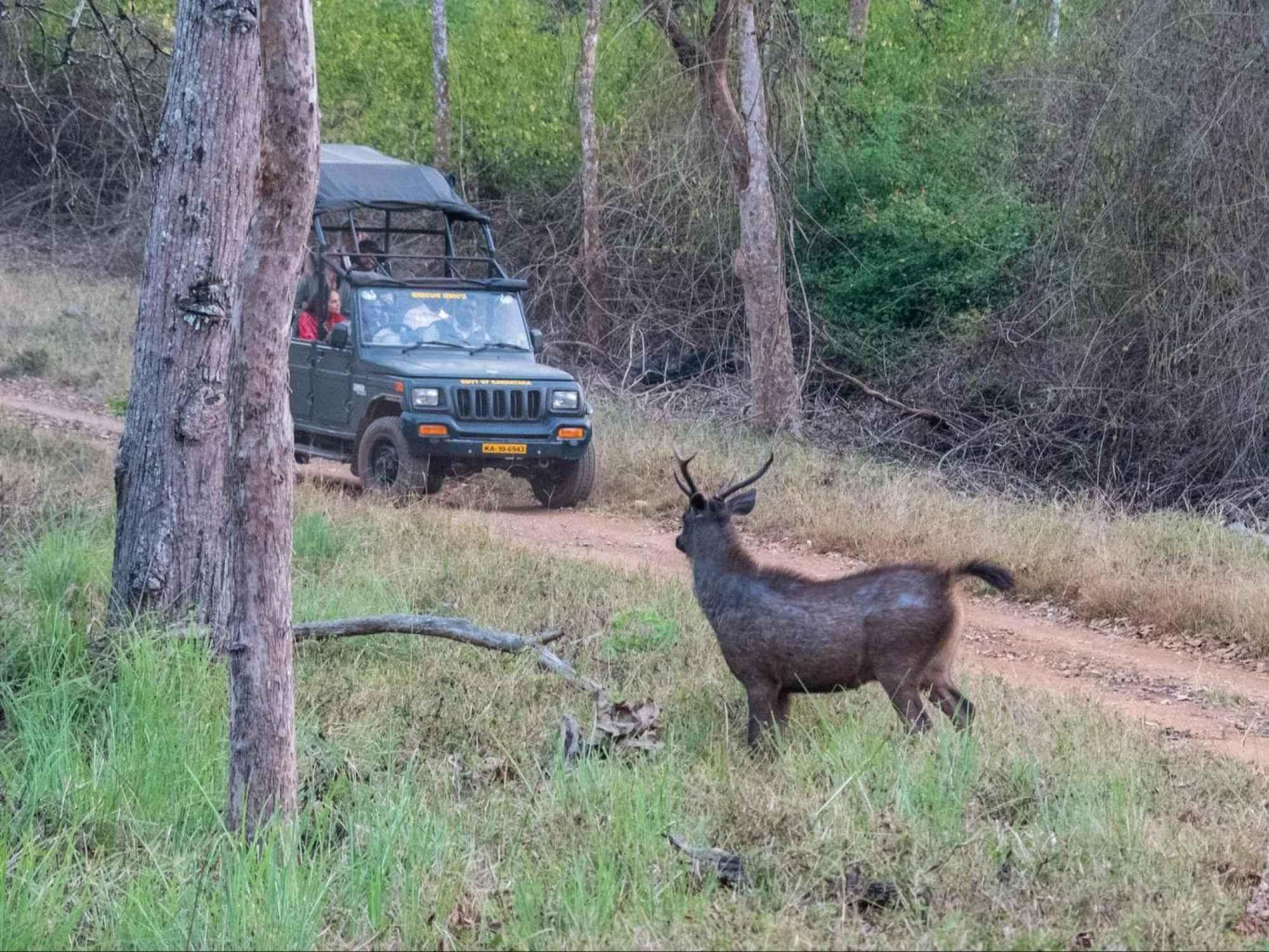 K Gudi safari drive