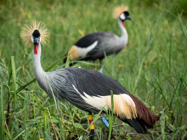 Birds at Akagera National park