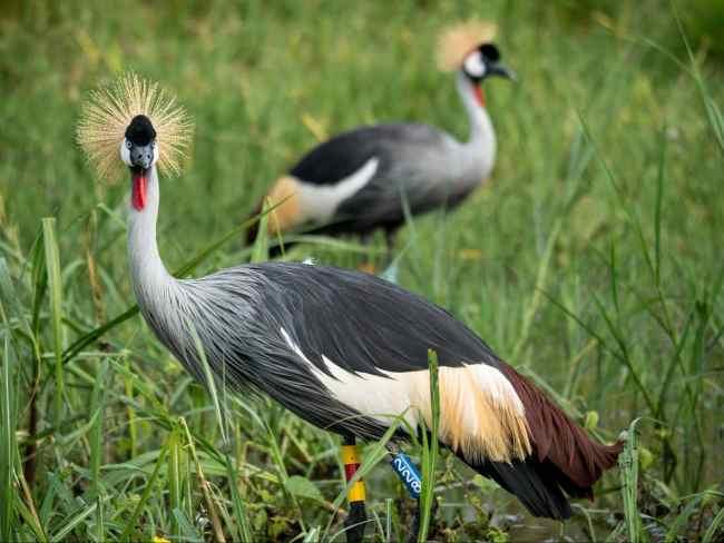 Birds at Akagera National park