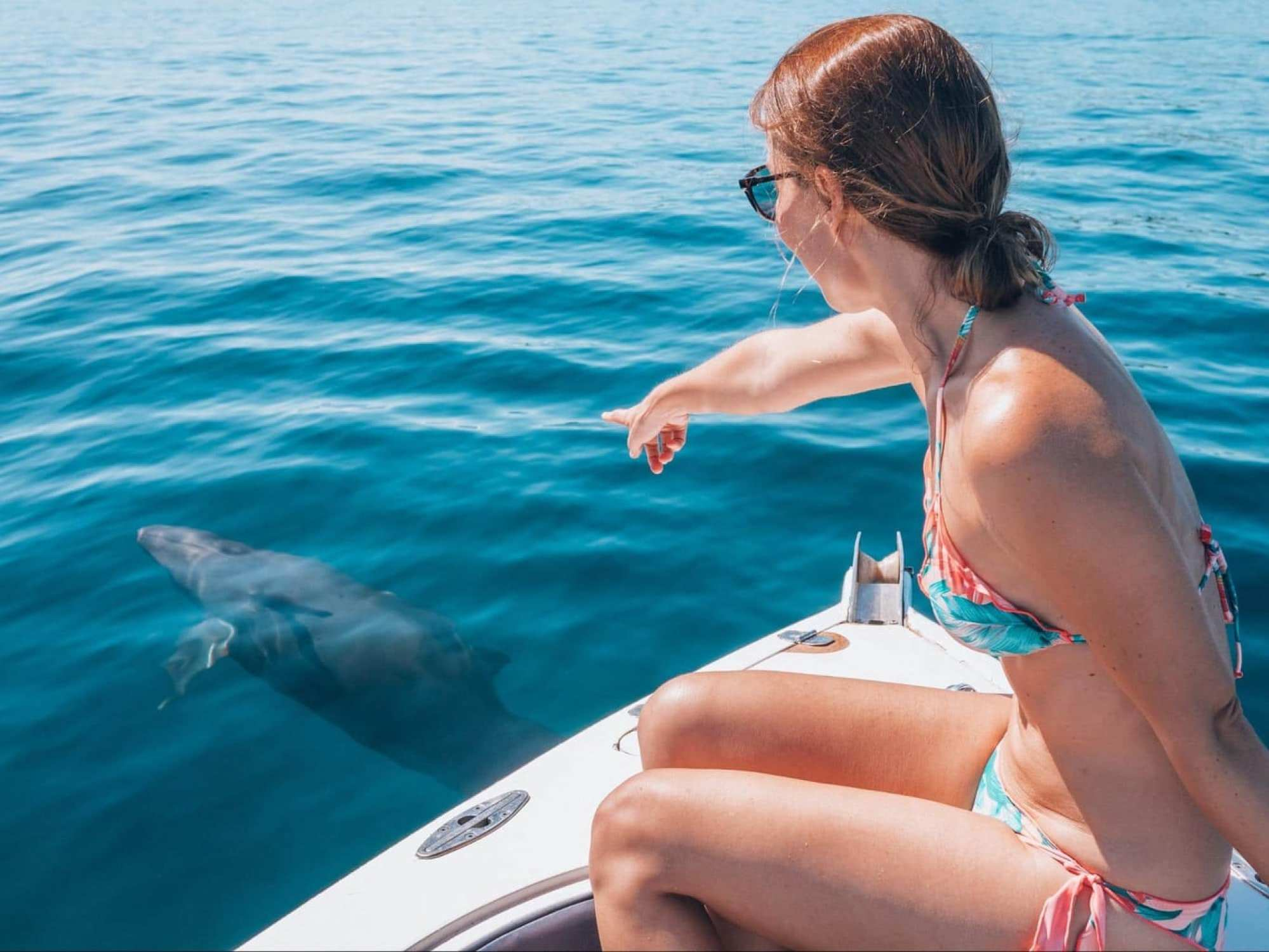 Dolphin spotting in the Mamanuca Islands around Castaway Island