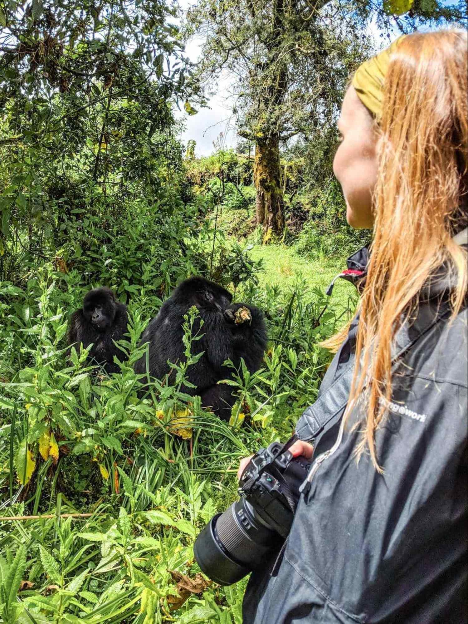 Seeing the gorillas in the sun