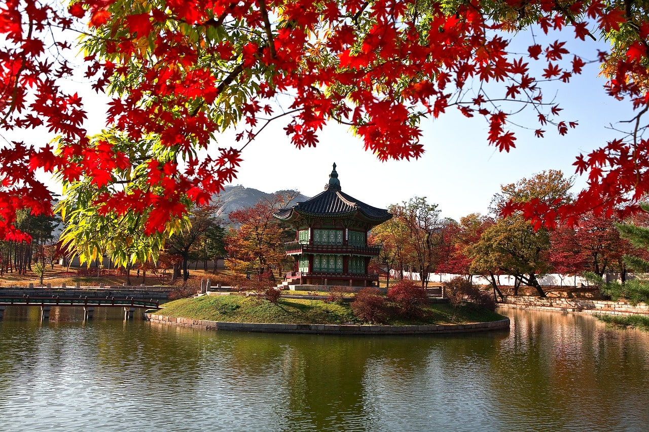 Autumn in Korea is a beautiful sight