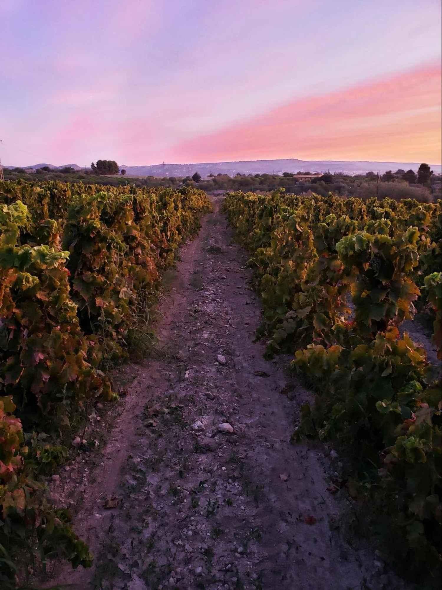 Zisola Sicily winery