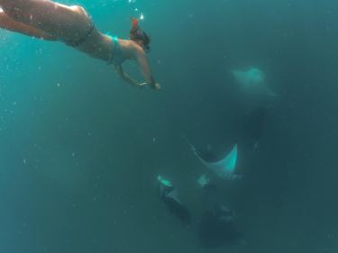 Free diving to see the mantas