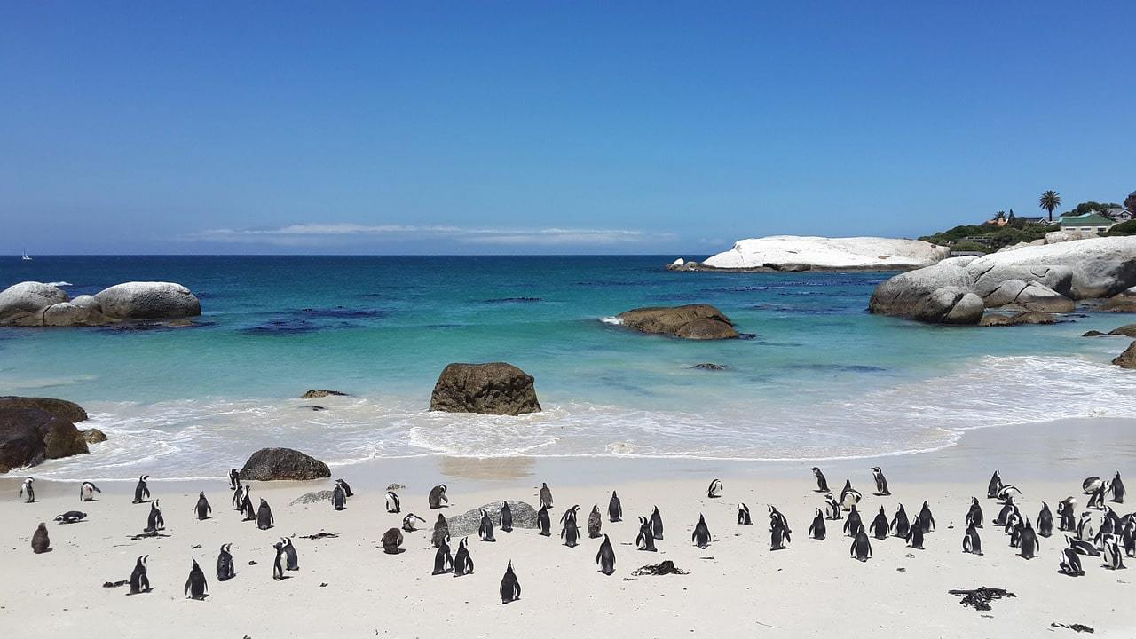 Meeting the penguins on Boulders Beach