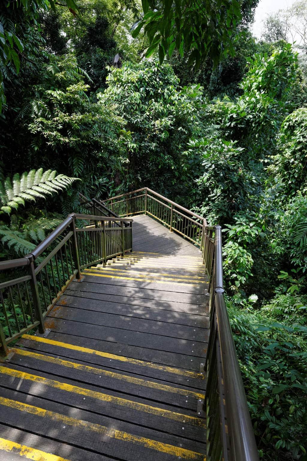 Marang Trail steps