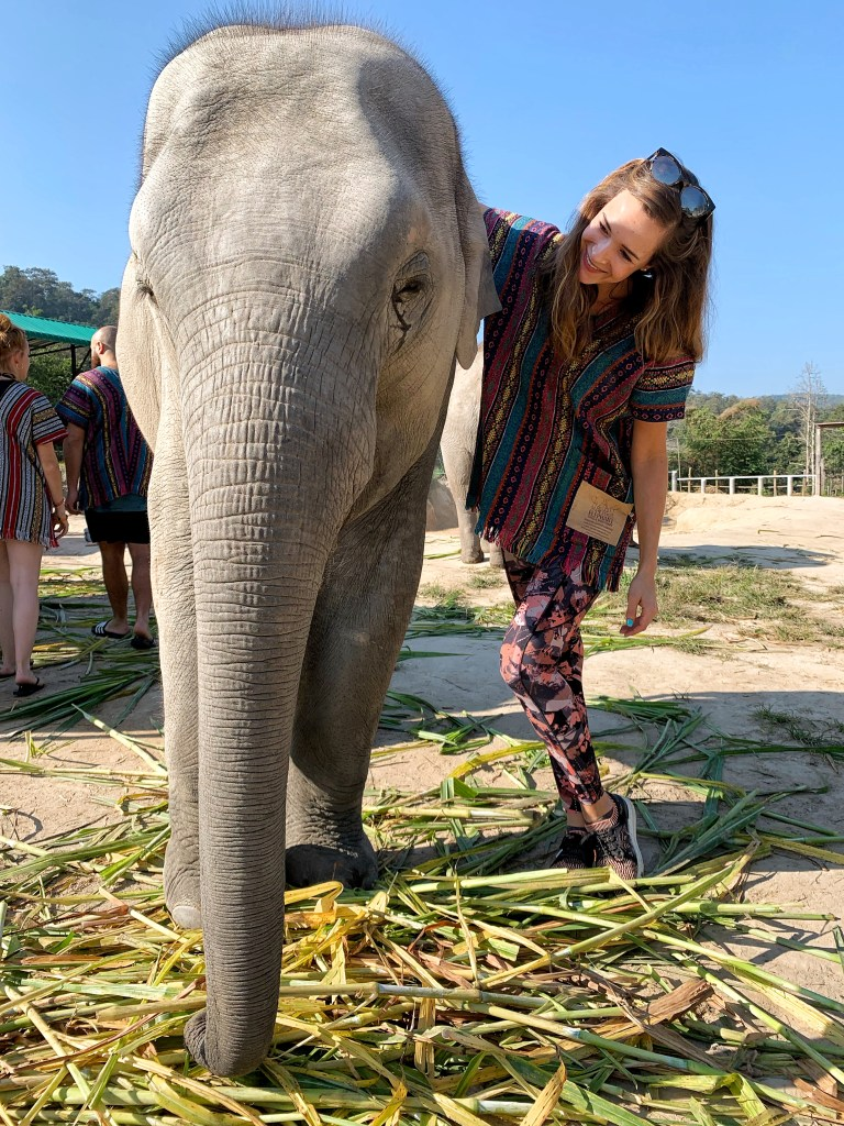 Elephant Sanctuary in Chiang Mai Thailand