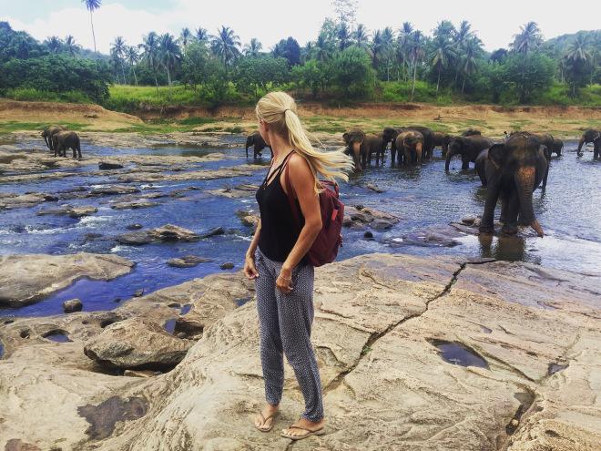Visiting Pinnawala Elephant Orphanage