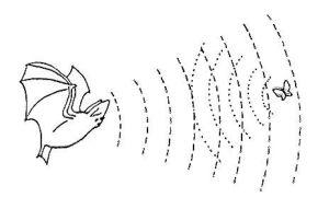 Morcego usando seu radar