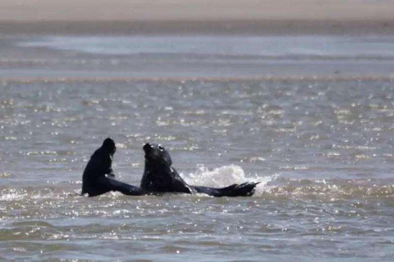 We maken een lange fietstocht naar Berck. Daar zit een groep Zeehonden die je vanaf de pier kan zien. Het is een leuk gezicht
