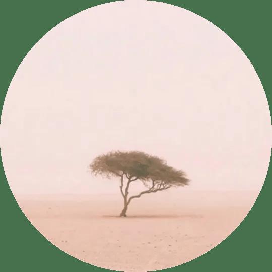 Loneliest Tree in the World Sahara