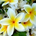 Plumeria and other flowers adorn an Easter arrangement