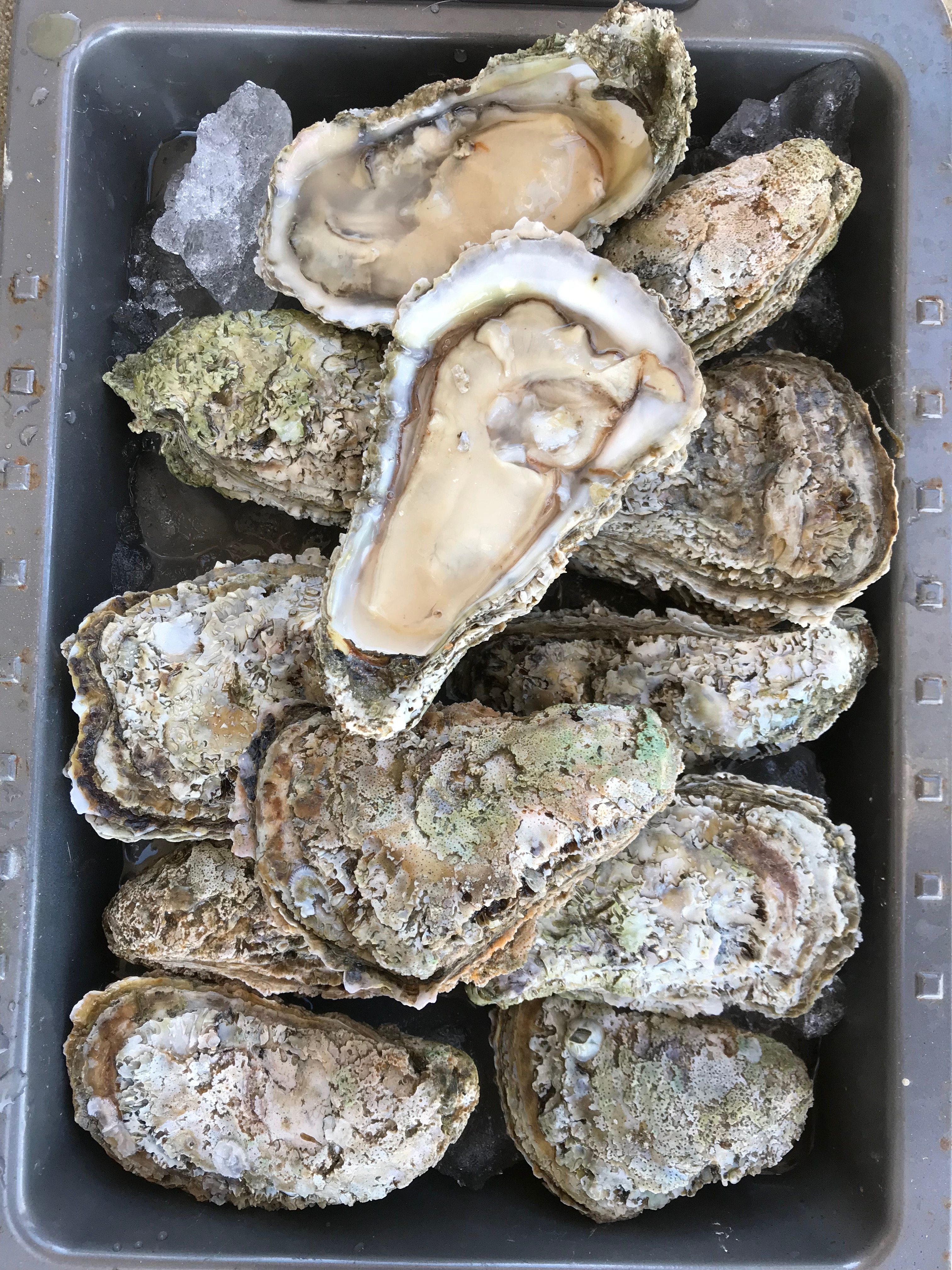 Grilled Oysters with Seasoned Butter Sauce & Oysters Rockefeller