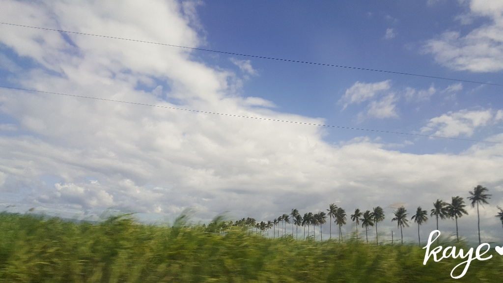 Coconut tree-lined field