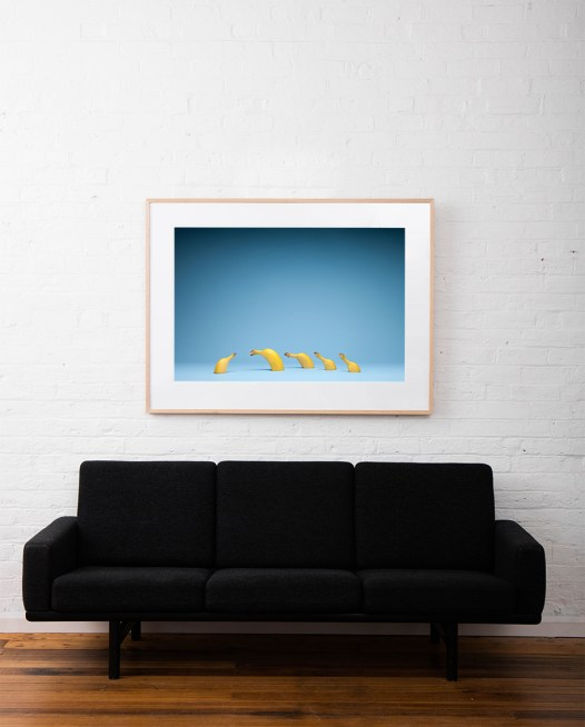 Still life photo of bananas with blue blackground framed in raw timber on white wall above sofa