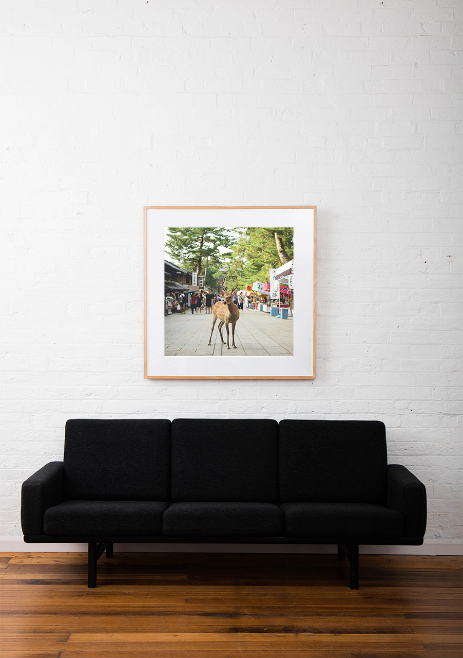 Photo of a deer in street in Urban Japan framed in black timber on white wall above sofa