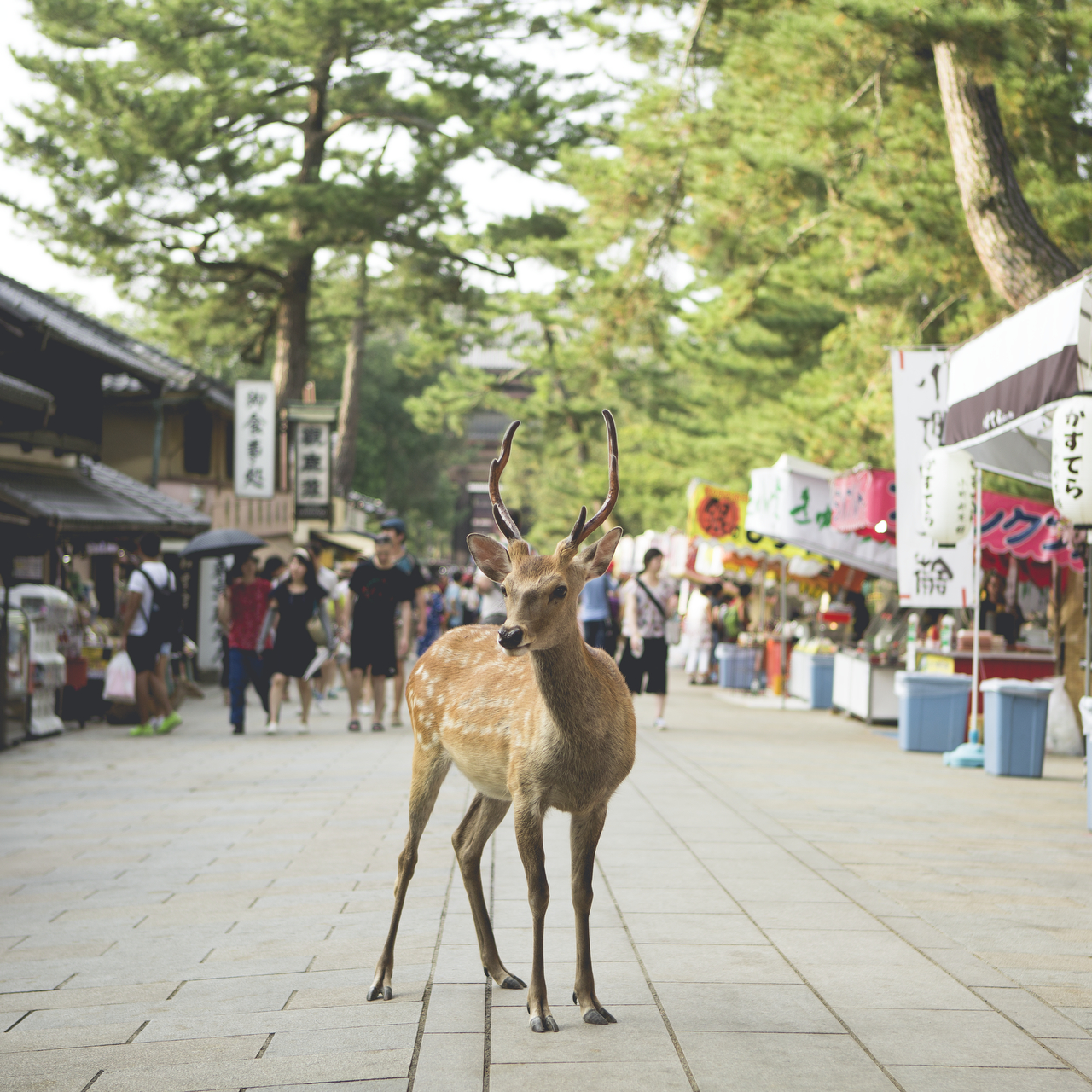 Photo of a deer in street in Urban Japan
