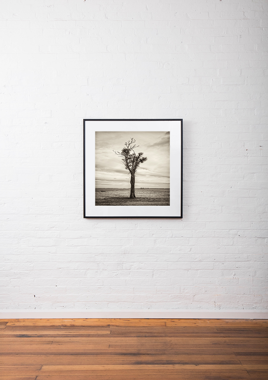 Black and white photo of Australian Landscape of fields and trees framed in black timber on white wall
