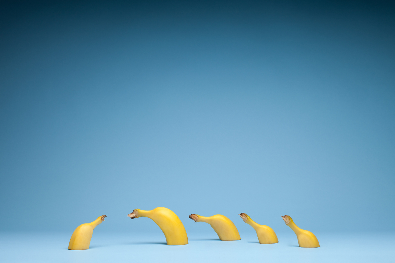 Still life photo of bananas with blue blackground