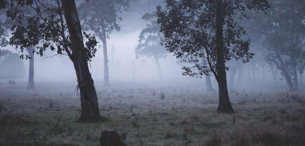 Australian Landscape photograh of trees in a misty/foggy day.