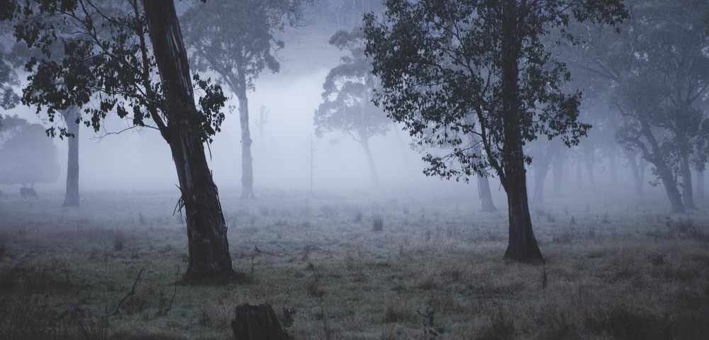 Australian Landscape photograh of trees in a misty/foggy day.