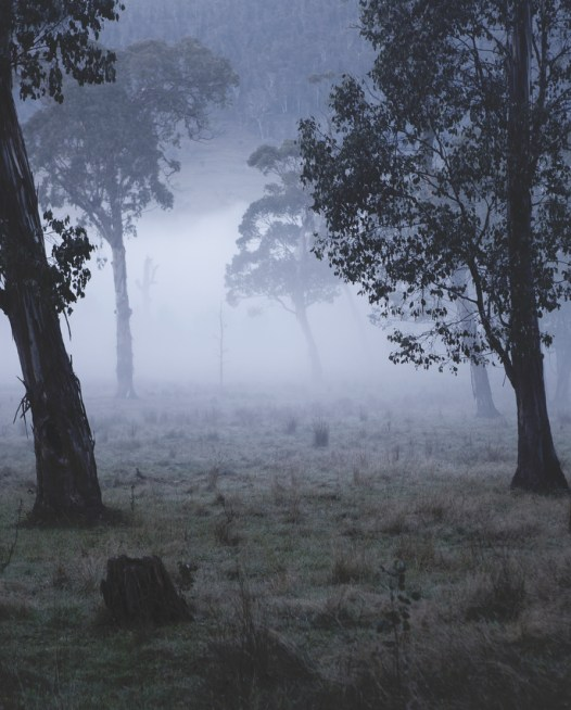 Australian Landscape photograh of trees in a misty/foggy day
