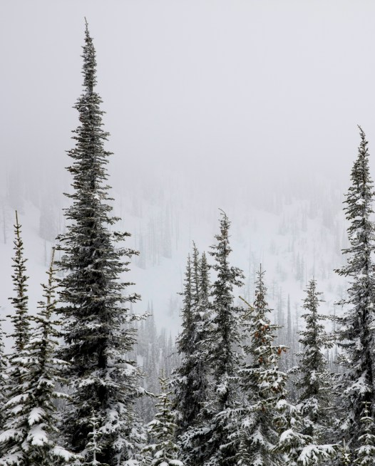 Snowy trees in Canadian mountains