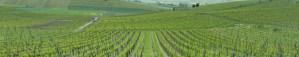 German wines travel stories