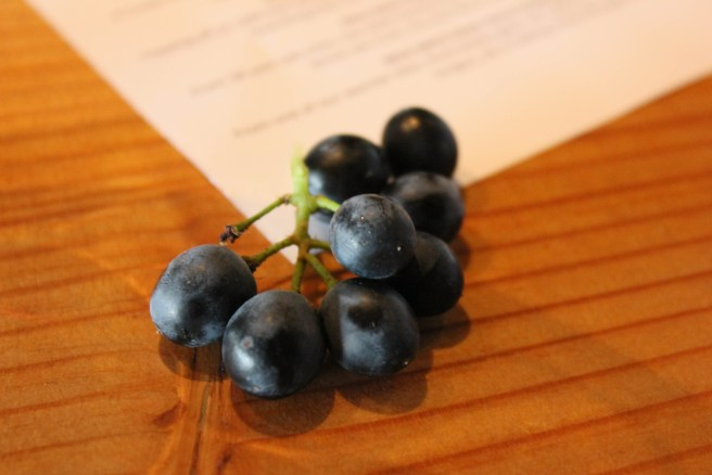 One of my favorite pictures from this year...fresh picked Merlot grapes at Charles Smith Wines
