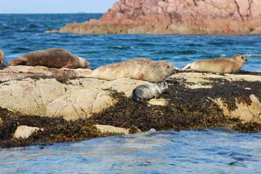 While the Isle of Staffa is the main draw, all the adorable seals and gorgeous views during the boat ride were a super bonus!
