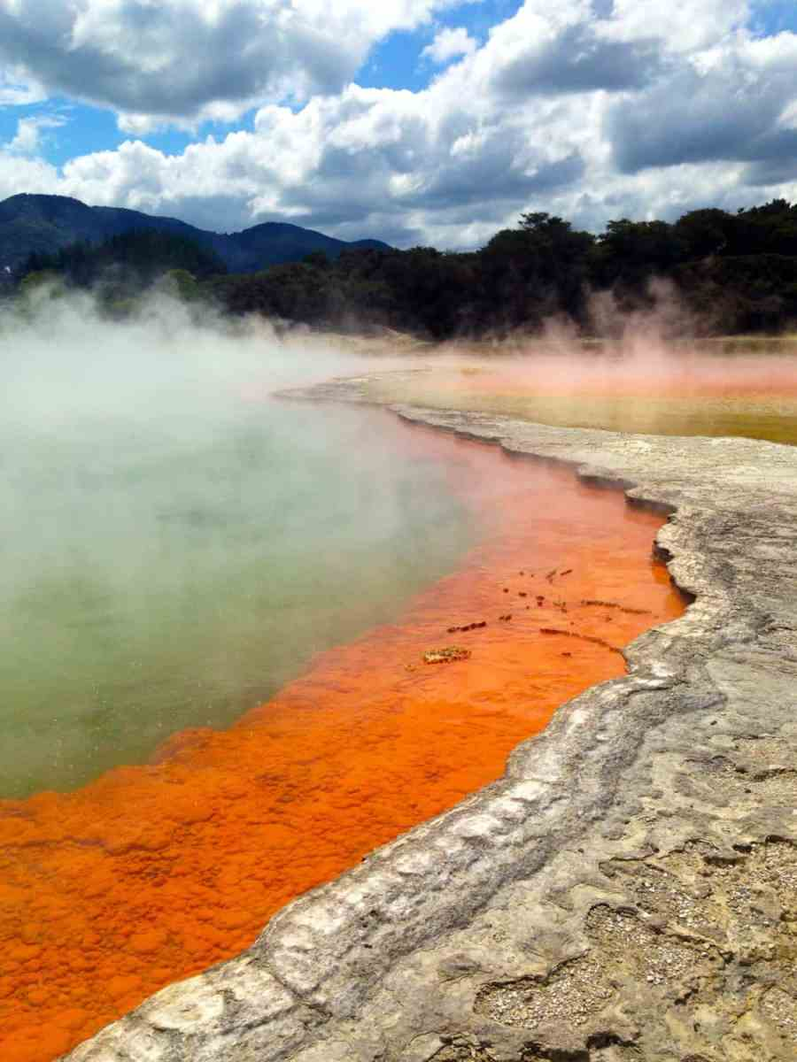 Redwoods & Rainbow Hot Springs: Rotorua, New Zealand