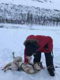 Pup love time while dog sledding