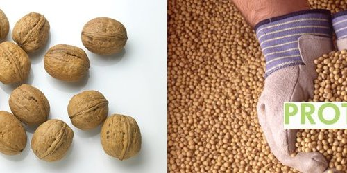 Plant based protein vegan vegetarian diet