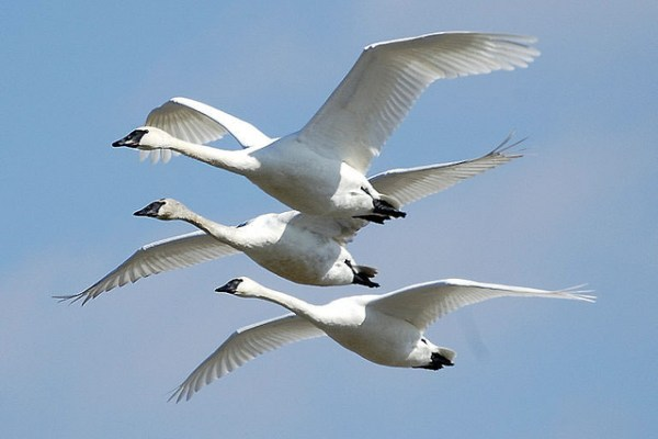 migratory birds bird safe buildings