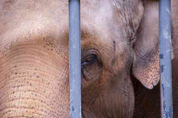 Ringling Bros. Agree to Pay Largest Ever Animal Welfare Fine