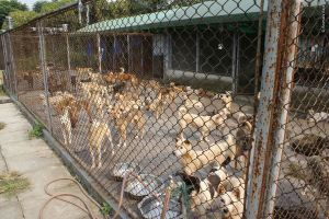Qimeng Dog Rescue</ul> <p>