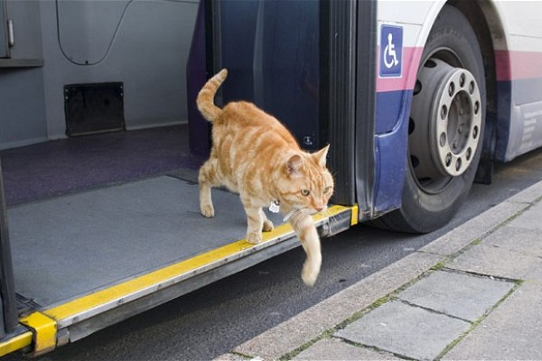 British Cat Promotes Public Transportation
