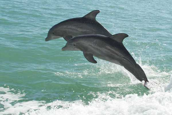 Call for Dolphins to be Recognized as 'Non-Human Persons'